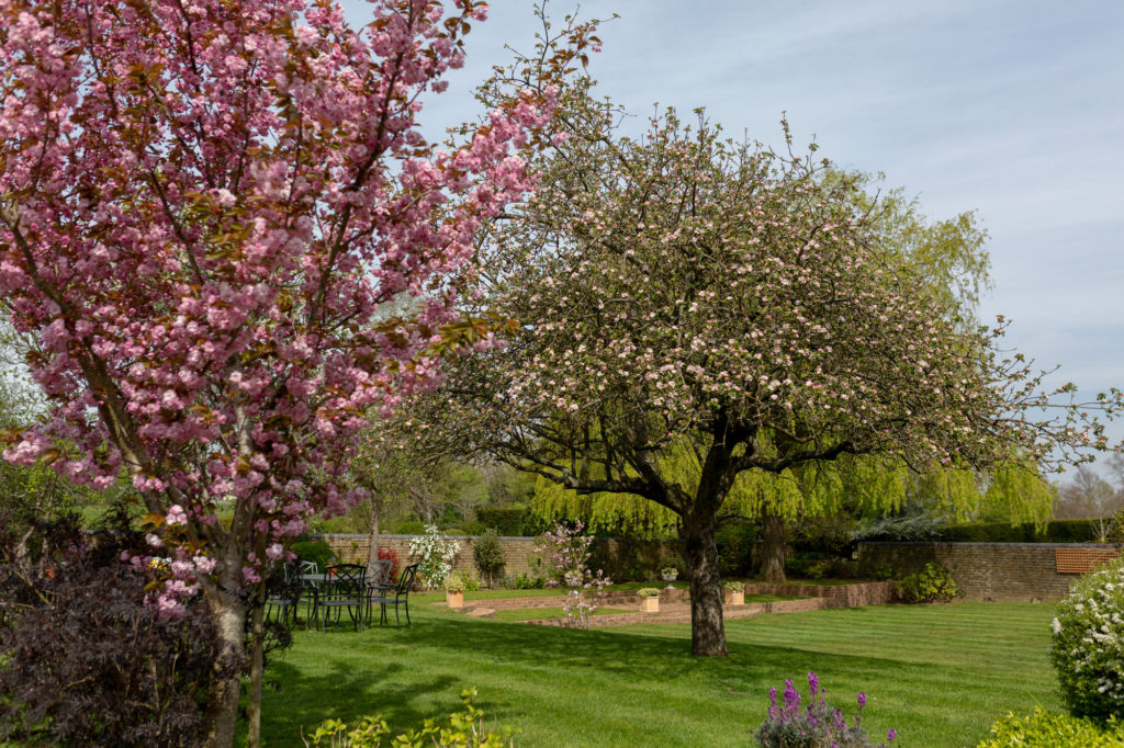 cherry blossom trees and gardens oaks farm marriage venue surrey oxfordshire wedding photography