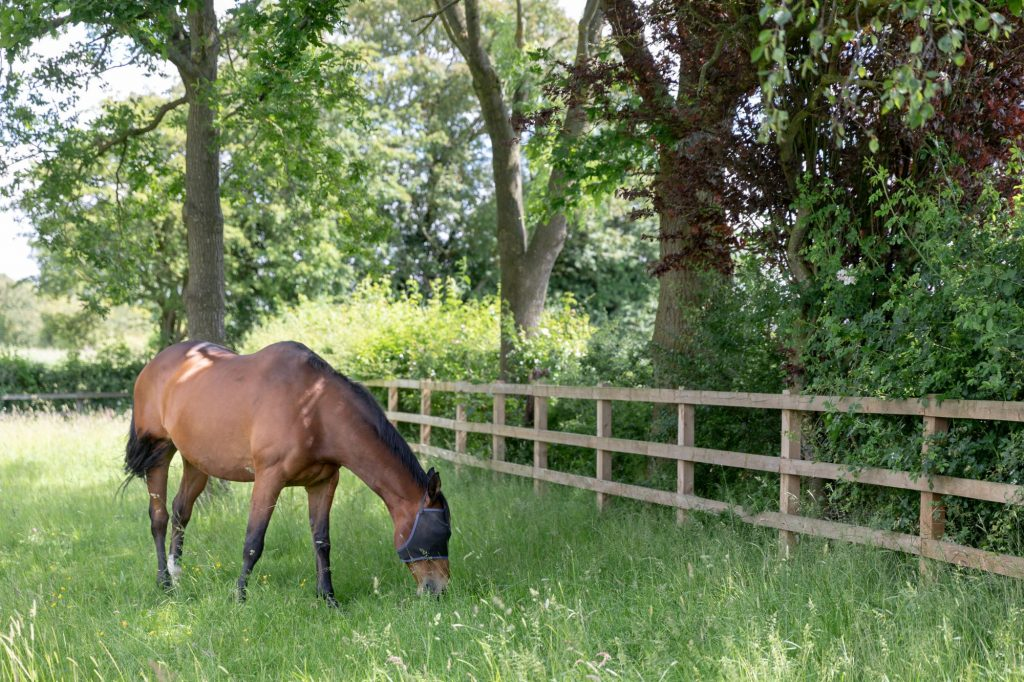 horse grazing manor hill house bromsgrove worcestershire oxford wedding photographers