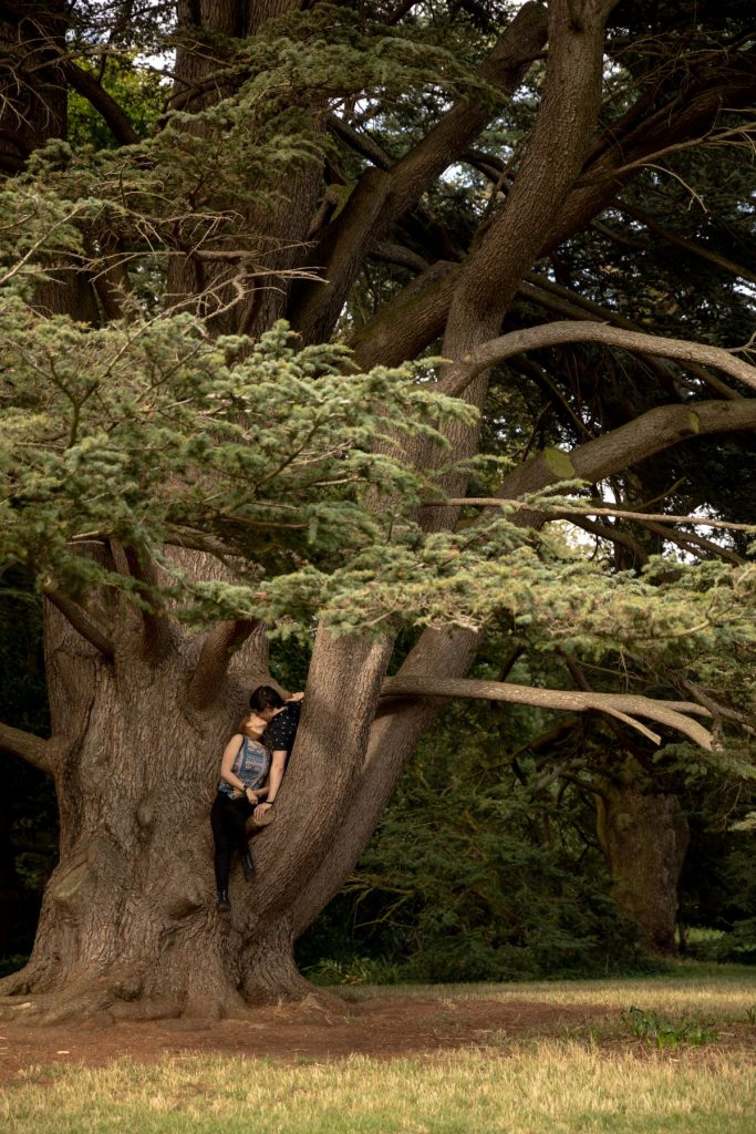 kissing couple climb tree oxford centre park engagement photo session oxfordshire wedding photographers