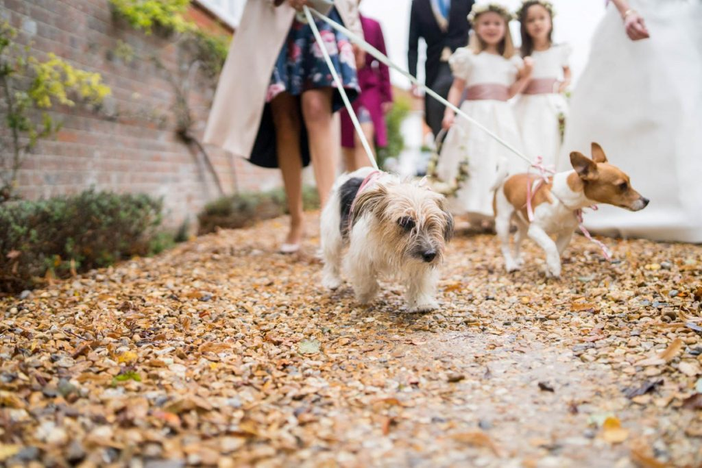 flowergirls with dogs church of st michael ceremony aston tirrold oxfordshire wedding photography