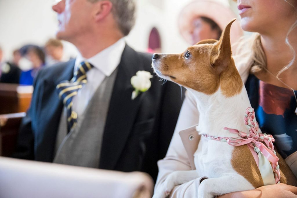 dog at marriage ceremony church of st michael aston tirrold oxford wedding photographers