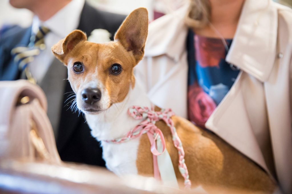 guests dog church of st michael ceremony aston tirrold oxfordshire wedding photographers