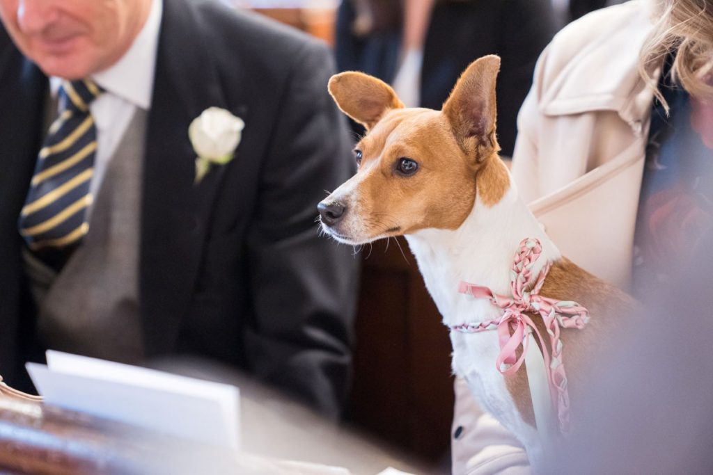 dog at marriage ceremony church of st michael aston tirrold oxfordshire wedding photography