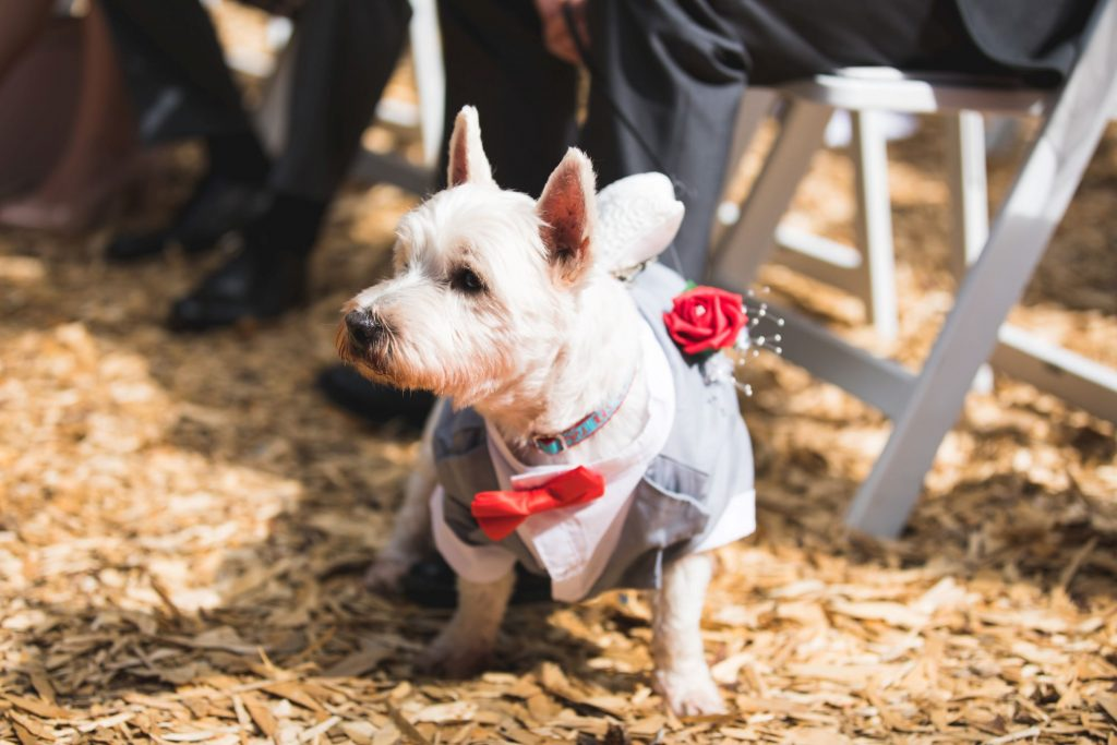 brides dog woodland ceremony wroxeter hotel shrewsbury shropshire oxford wedding photography