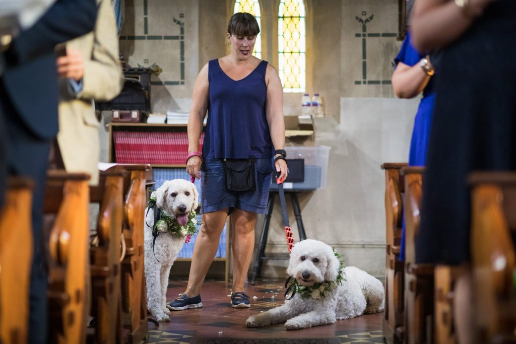 brides grooms dogs watch marriage ceremony st marys catholic church husbands bosworth leicestershire oxford wedding photographers