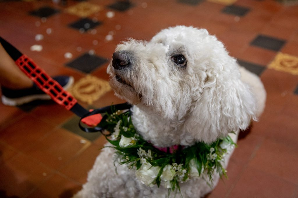 labradoodle floral dog collar st marys catholic church marriage ceremony husbands bosworth leicestershire oxfordshire wedding photographer