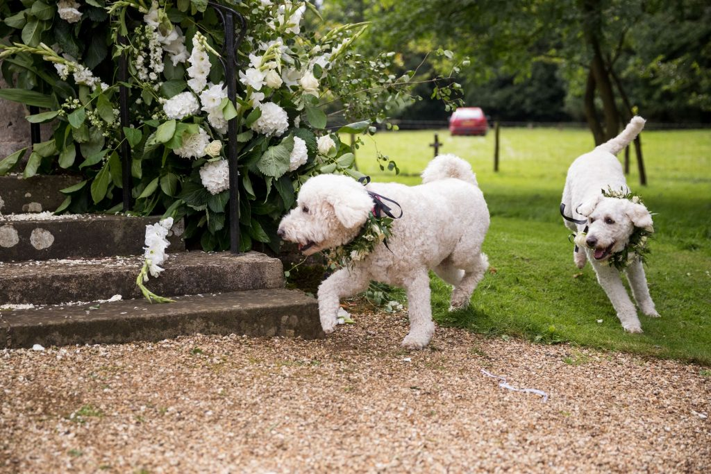 brides grooms labradoodles scamper st marys churchyard husbands bosworth leicestershire oxford wedding photographers